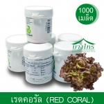 เมล็ดพันธุ์เรดคอรัล / Red Coral (เคลือบ) 1,000 เมล็ด