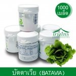 เมล็ดพันธุ์บัตตาเวีย / Batavia (เคลือบ) 1,000 เมล็ด