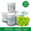 เมล็ดพันธุ์กรีนโอ๊ค / Green Oak (เคลือบ) 1,000 เมล็ด thumbnail 1